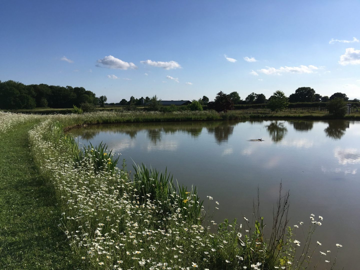Oxton Hill lake in summer