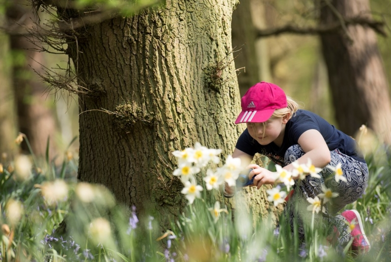 Hares and Eggs easter trail - Visit Sherwood Forest